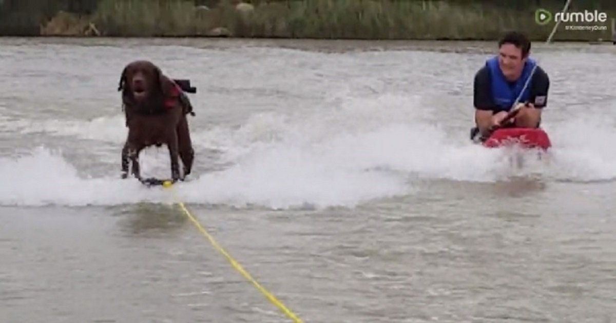w3 1.jpg?resize=412,232 - Water-Skiing Labrador Is Able To Keep Up With His Owners Like A Boss