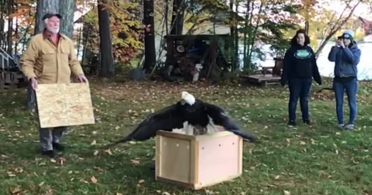 y3 5.jpg?resize=1200,630 - Majestic Bald Eagle Returns Home to Nature