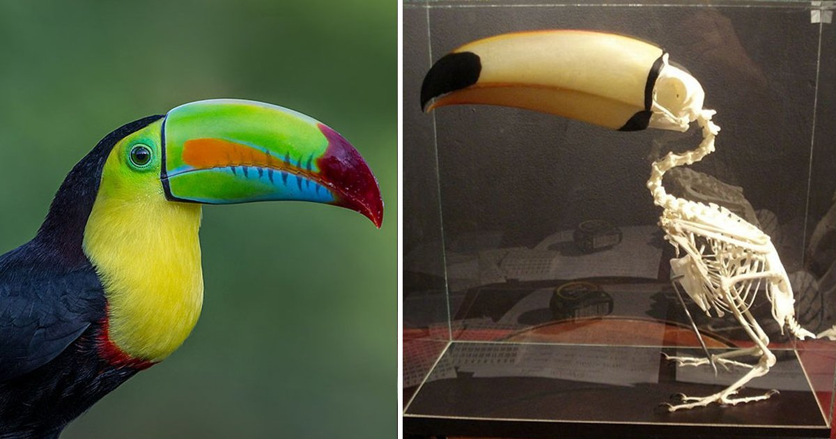 1 256.jpg?resize=412,232 - People Are Sharing Some Weird Yet Interesting Facts About Toucans