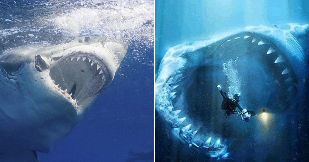 1 318.jpg?resize=1200,630 - Pescadores Descubrieron Un Tiburón Monstruoso Que Batió Récords Al Atragantarse Con Una Tortuga Gigante