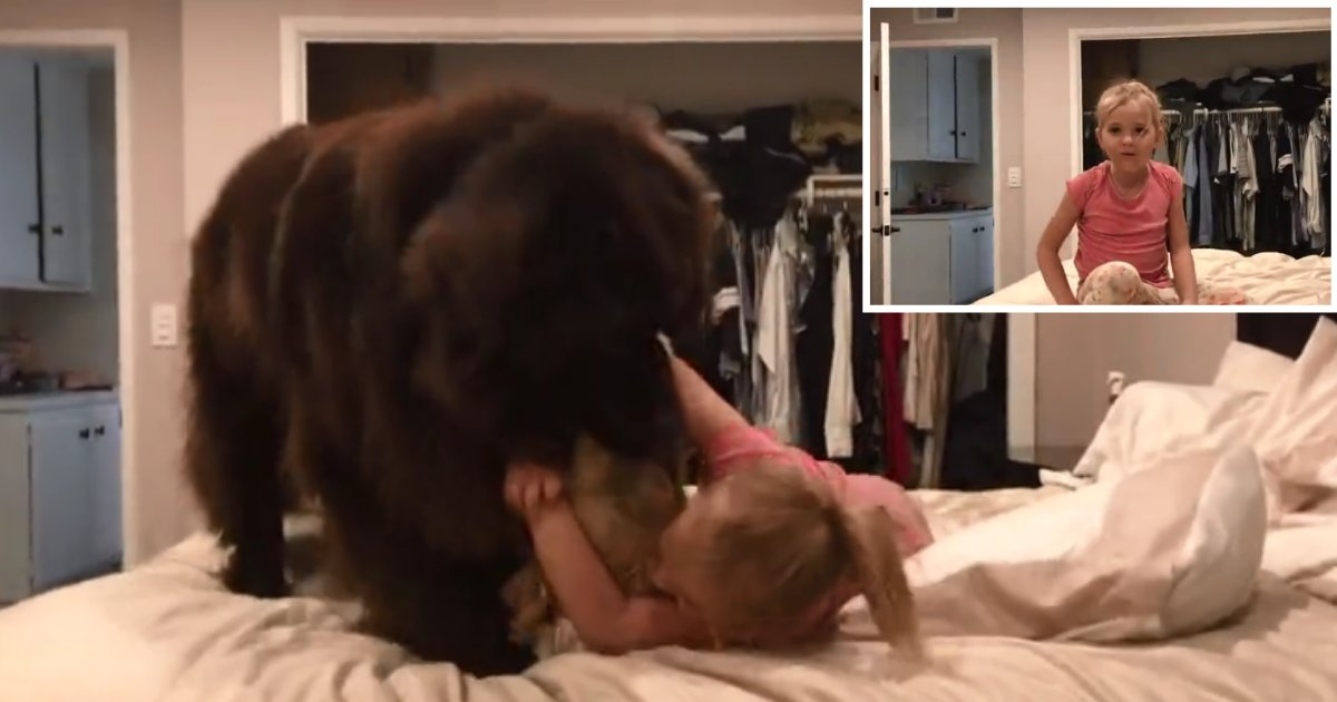 1 53.png?resize=412,232 - A Baby Girl and Her Newfoundland Dog Get Into An Adorable Pillow Fight