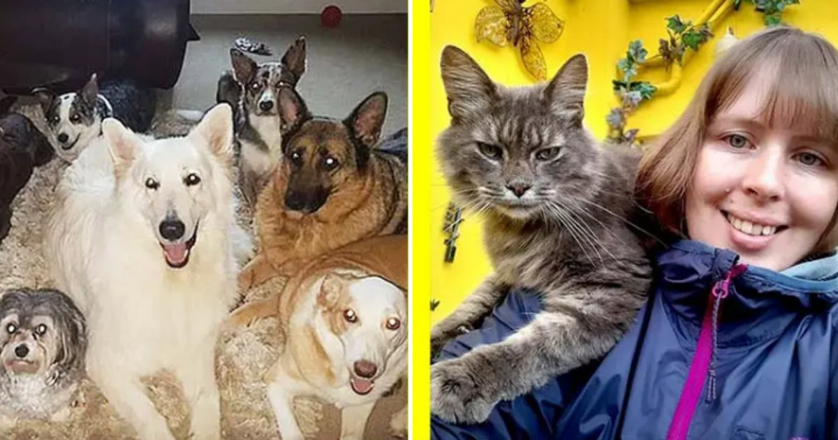 2 11.png?resize=1200,630 - A Woman Got All 17 of Her Pets Together to Not Move at All For a Picture