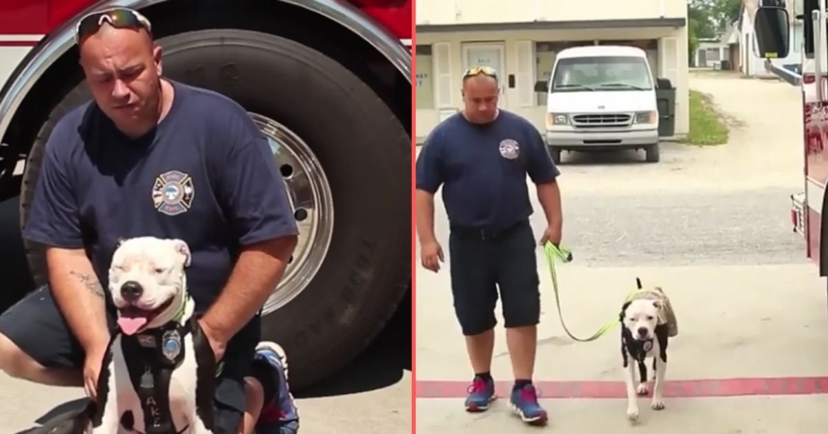 2 19.jpg?resize=1200,630 - Pit Bull Mix Turns Out to be a Firefighter