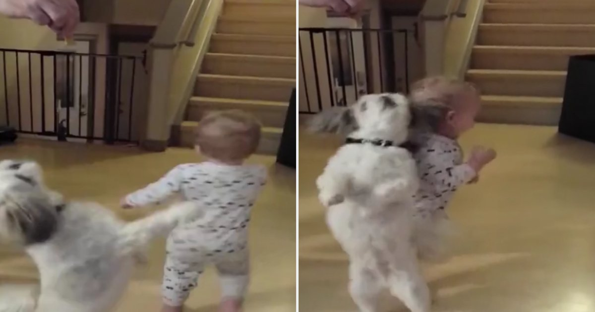 2 2.png?resize=412,232 - Baby And Puppy Spin Together To Get Snacks
