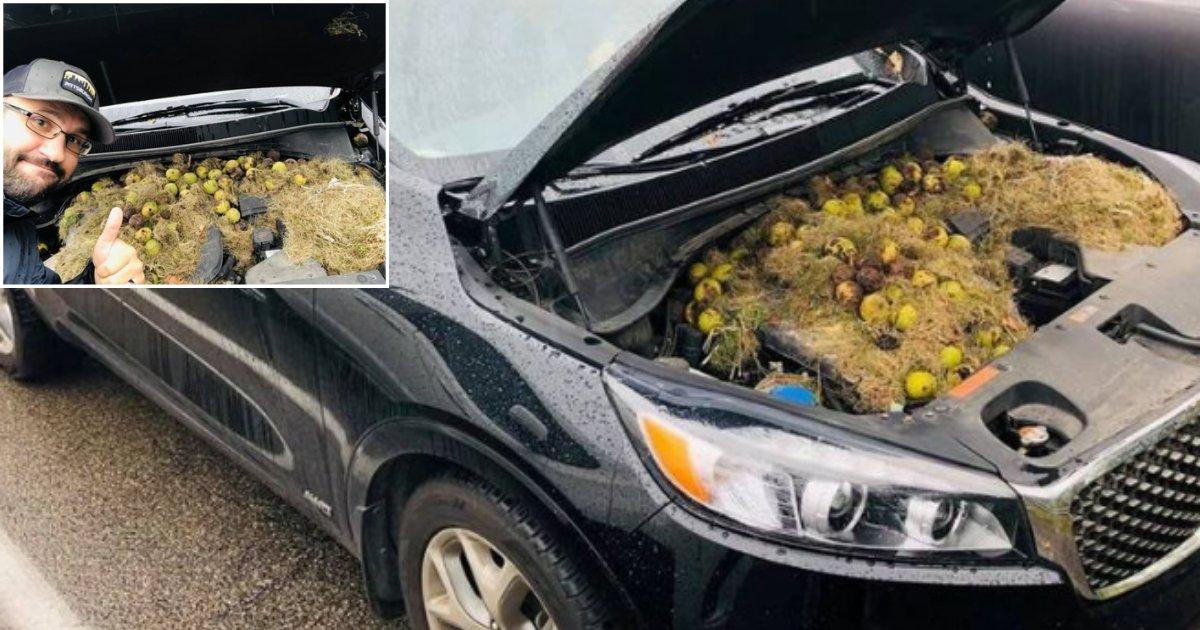 2 55.png?resize=412,275 - Une femme a été stupéfaite de découvrir ce qui se cachait sous le capot de sa voiture