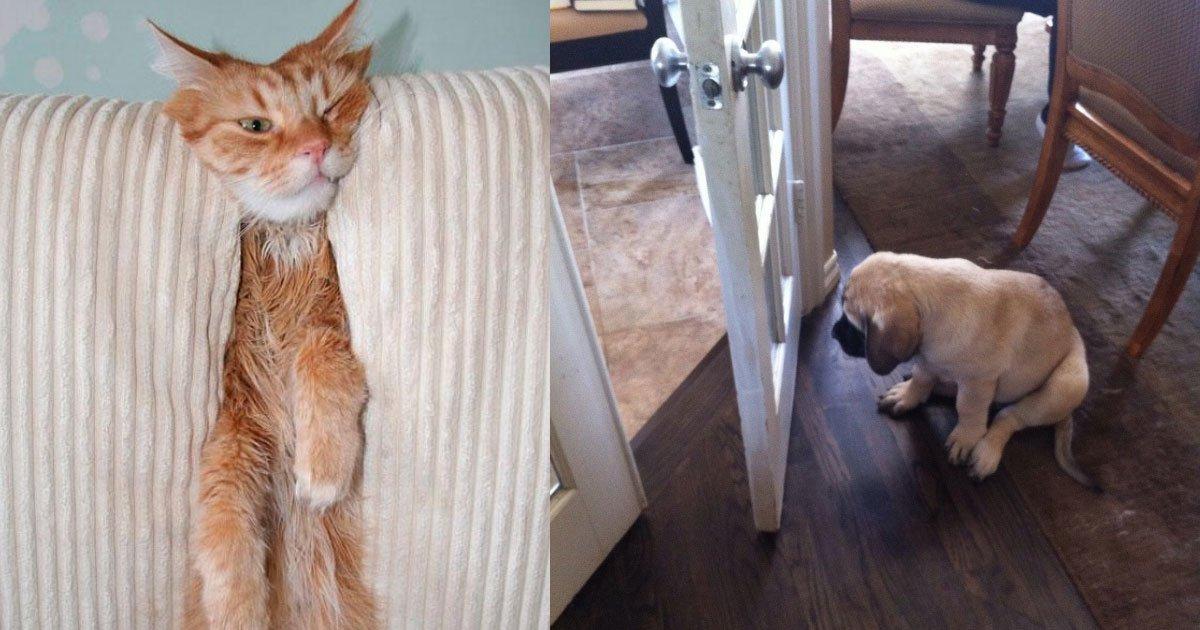 20 hilarious pictures that show different habits of pets.jpg?resize=412,232 - 20 Hilarious Pictures That Show Different Habits Of Pets