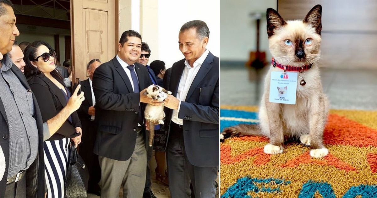 5 78.jpg?resize=1200,630 - People Complained About a Stray Cat Roaming Around in a Law Firm, So the Firm Decided to Hire Him