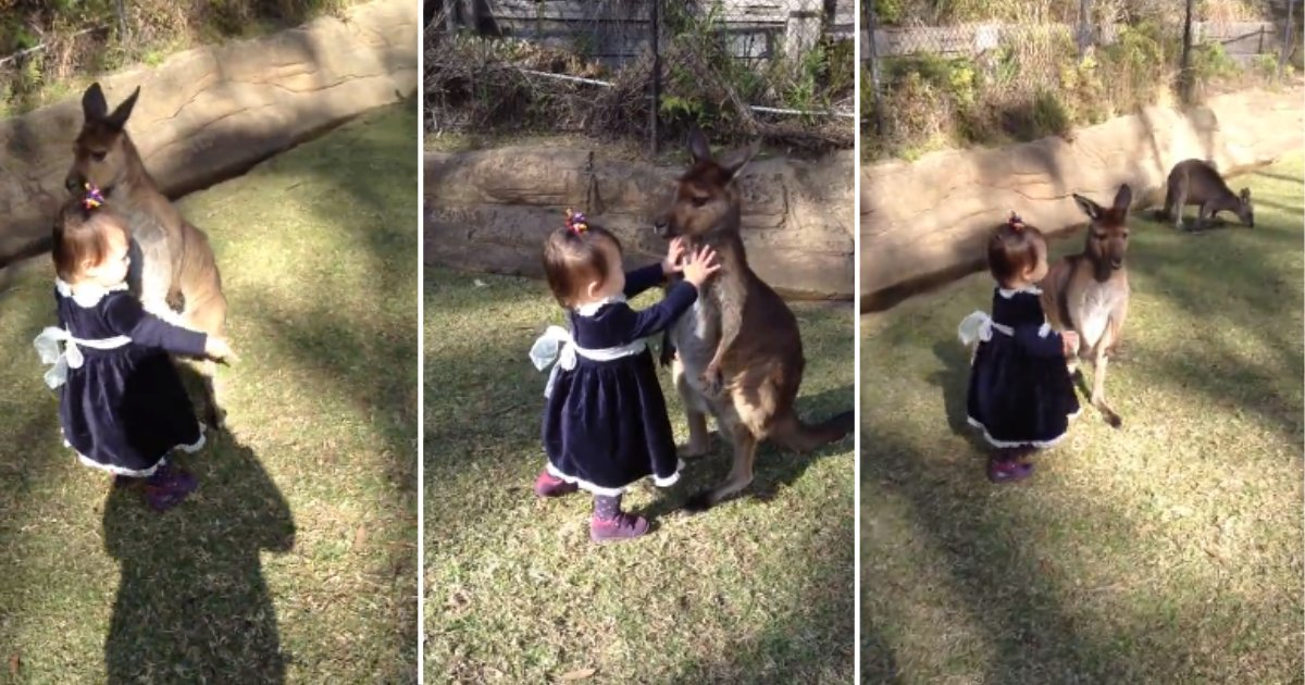 7.png?resize=1200,630 - Two-Year-Old Baby Girl Dressed Up Like A Princess Played With A Baby Kangaroo