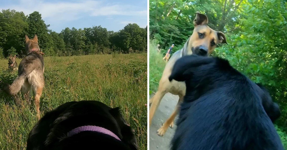 a 15.jpg?resize=412,232 - A Man Put A GoPro On His Dog's Back To Capture The Way He Sees The World