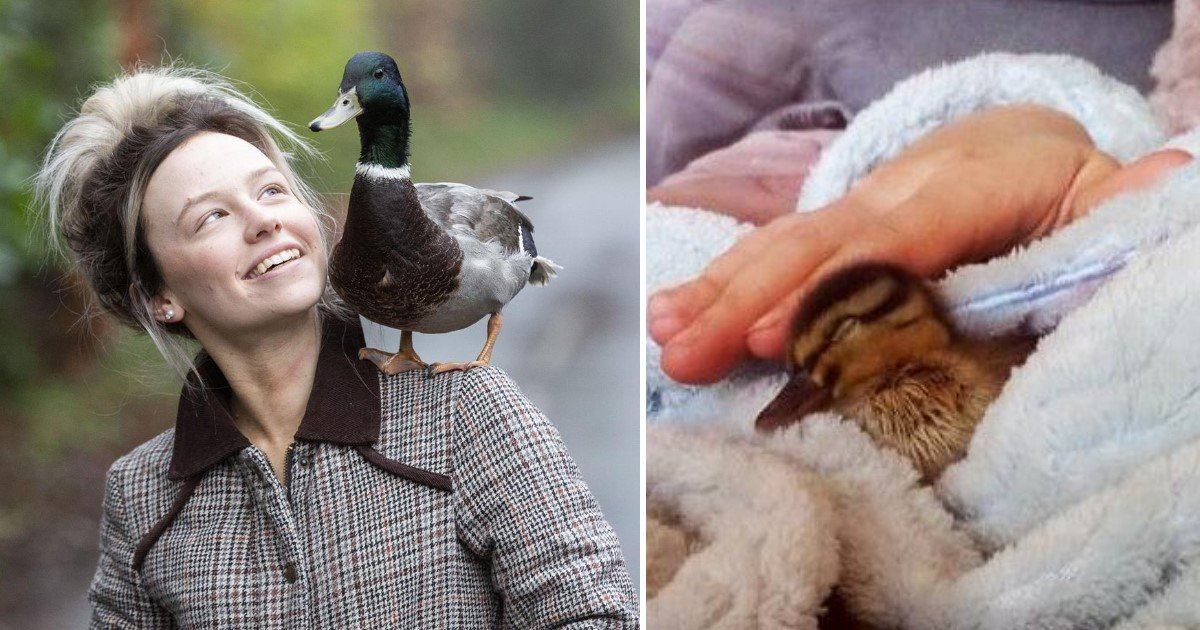 a 18.jpg?resize=1200,630 - A Family Adopted A Stray Duck After It Showed Up To Their House In The Middle Of A Rainstorm