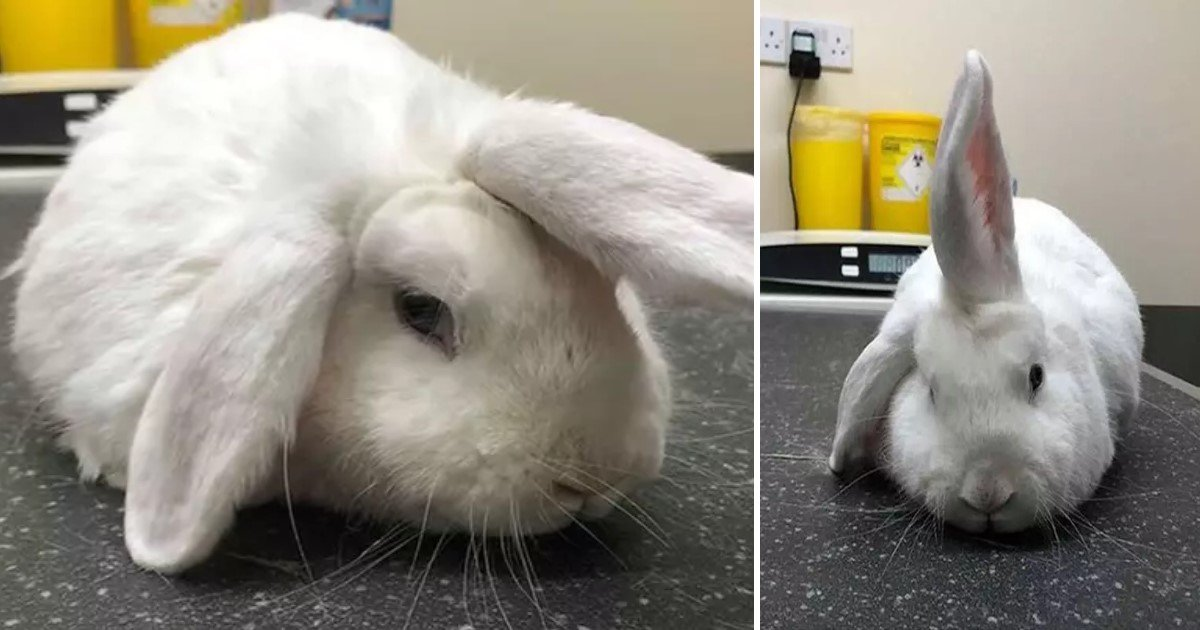 a 37.jpg?resize=1200,630 - Four-Year-Old 'Unicorn' Rabbit Is Looking For A New Home This Christmas
