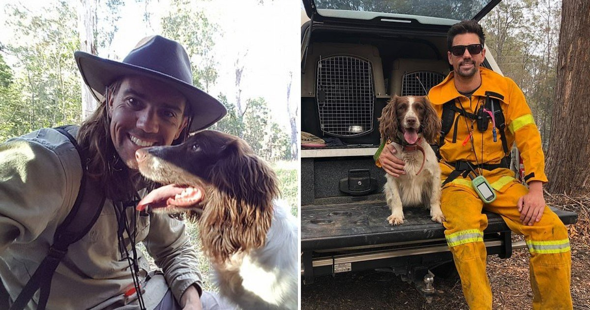 a 9.jpg?resize=1200,630 - Taylor The Hero Dog Saved A Number Of Koalas During Wildfires In Australia