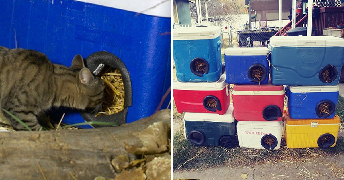 adgadsga.jpg?resize=412,232 - Utah Man Creates Shelters From Discarded Coolers So Cats Can Stay Warm And Safe In Winter