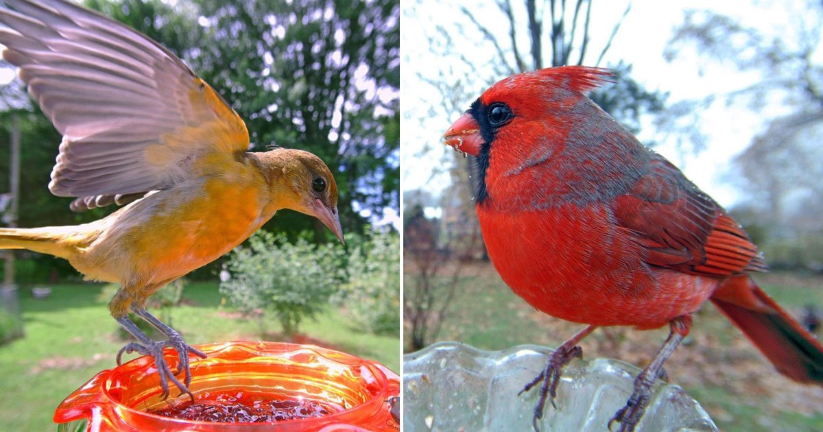 beautiful birds.jpg?resize=1200,630 - Woman Sets Up A Bird Feeder Cam To Capture Different Types Of Beautiful Birds