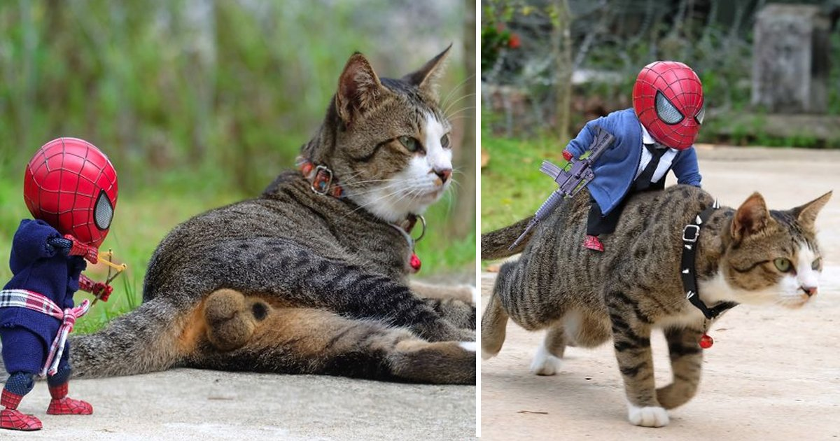 bhsdgs.jpg?resize=1200,630 - Thai Artist Makes Cats Pose With Baby Spider-Man To Create Hilarious Scenarios