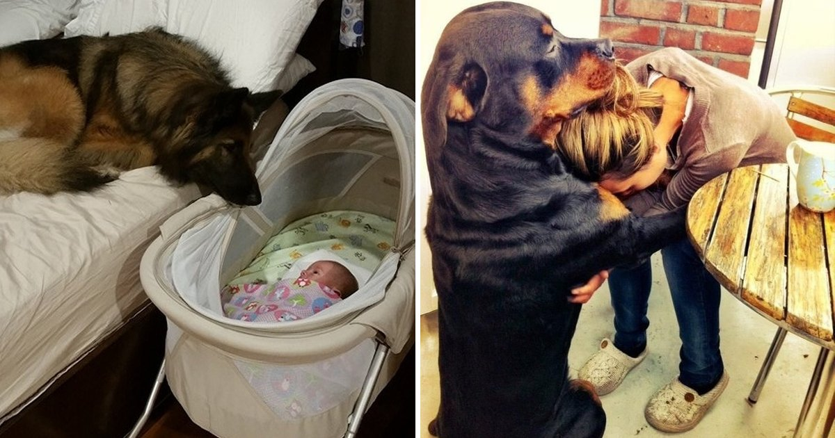 csddsf.jpg?resize=412,232 - Priceless Photos Of 20 Dogs Who Love Their Humans So Much