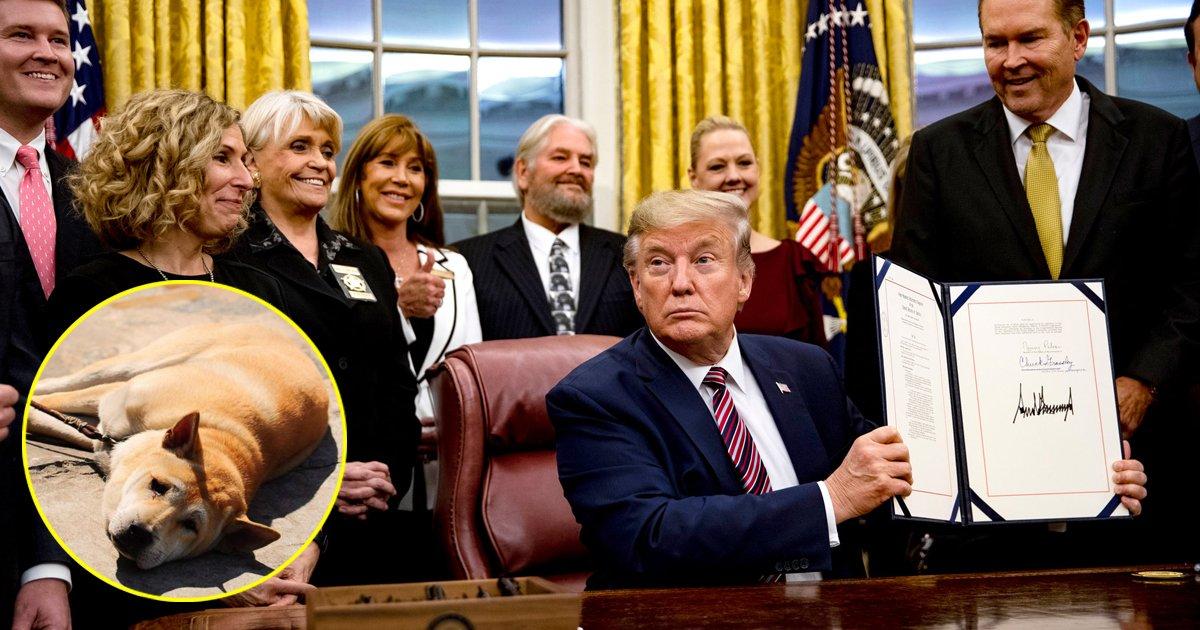 dfsdfdsf.jpg?resize=412,232 - Trump Signs Bill Making Animal Cruelty A Federal Felony