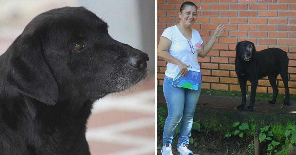 dog uses fake money to buy treats.jpg?resize=1200,630 - Adopted Dog Uses His Own Money To Buy Treats At A Store
