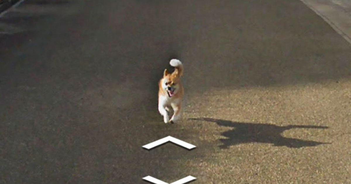 doggo8.png?resize=1200,630 - Tiny Dog Followed Google Street View Car And Hilariously Improved Each And Every Photo