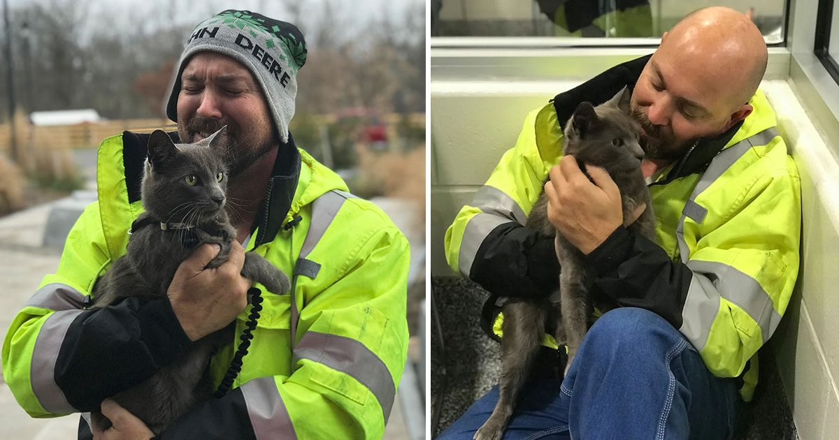 fagddasgadg.jpg?resize=366,290 - Trucker Reunites With Feline Travel Buddy Four Months After He Went Missing