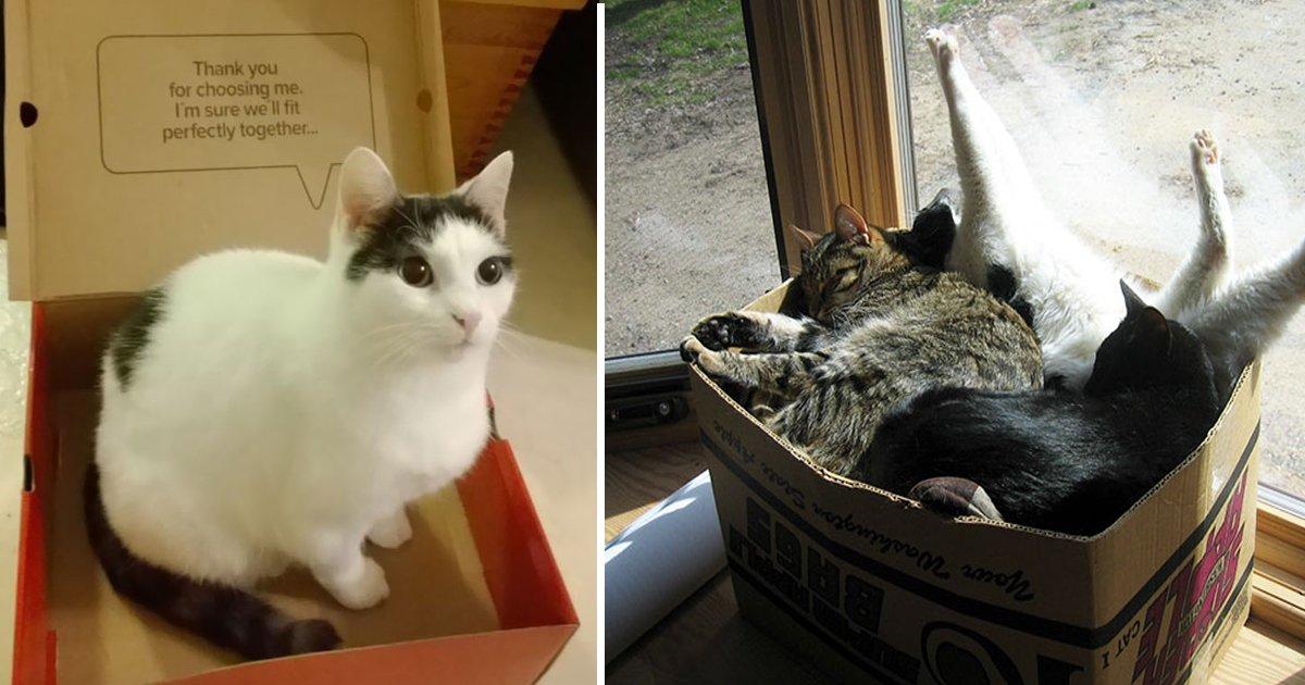 ggsdgsd.jpg?resize=412,232 - Adorable Cats Love Being Inside Boxes