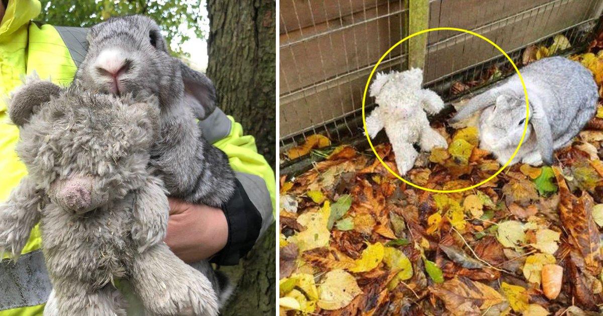 ggsgddsgsdg.jpg?resize=412,232 - Scared Rabbit Abandoned In Box Clings To His Favorite Teddy Bear
