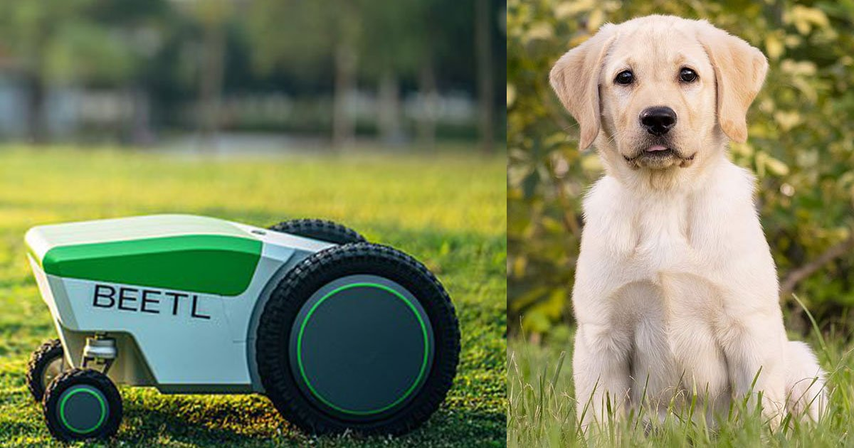 robot that detects and cleans up your dogs mess using cameras and sensors.jpg?resize=412,232 - This Robot Detects And Cleans Up Dog's Mess Using Cameras And Sensors