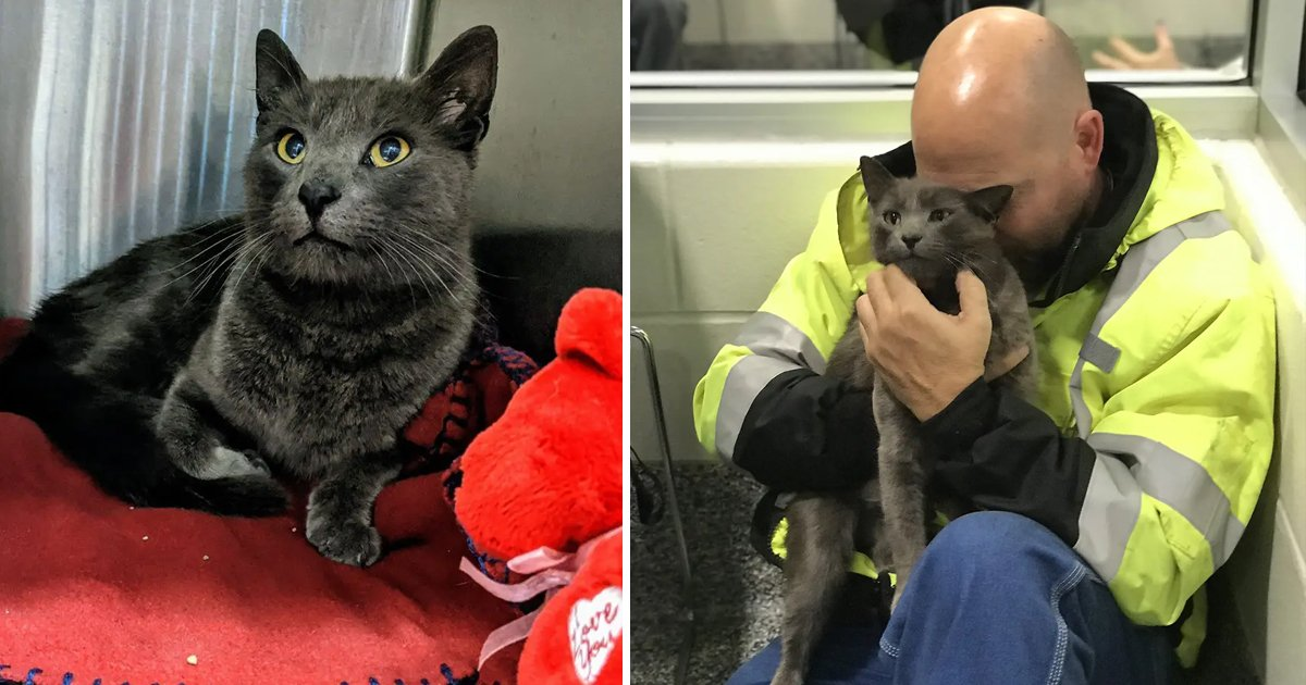 sadasdasd.jpg?resize=412,275 - Trucker Lost His Travel Partner Cat On A Cross Country Trip And Cries Hard After Reuniting