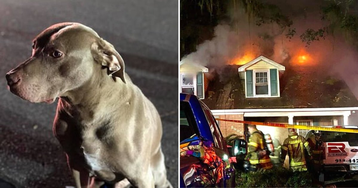 sammy4.png?resize=412,232 - Hero Dog Saved His Family From A House Fire That Broke Out In The Middle Of The Night