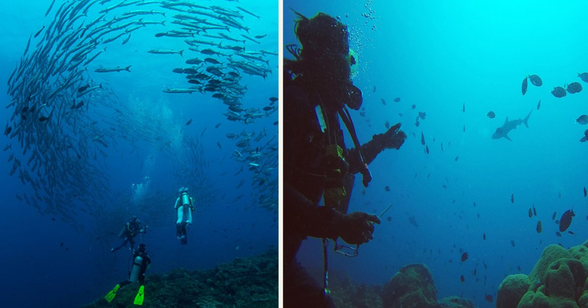 untitled 1 15.jpg?resize=412,232 - Scuba Divers Were Surrounded By Thousands Of Barracuda In A Breathtaking Experience