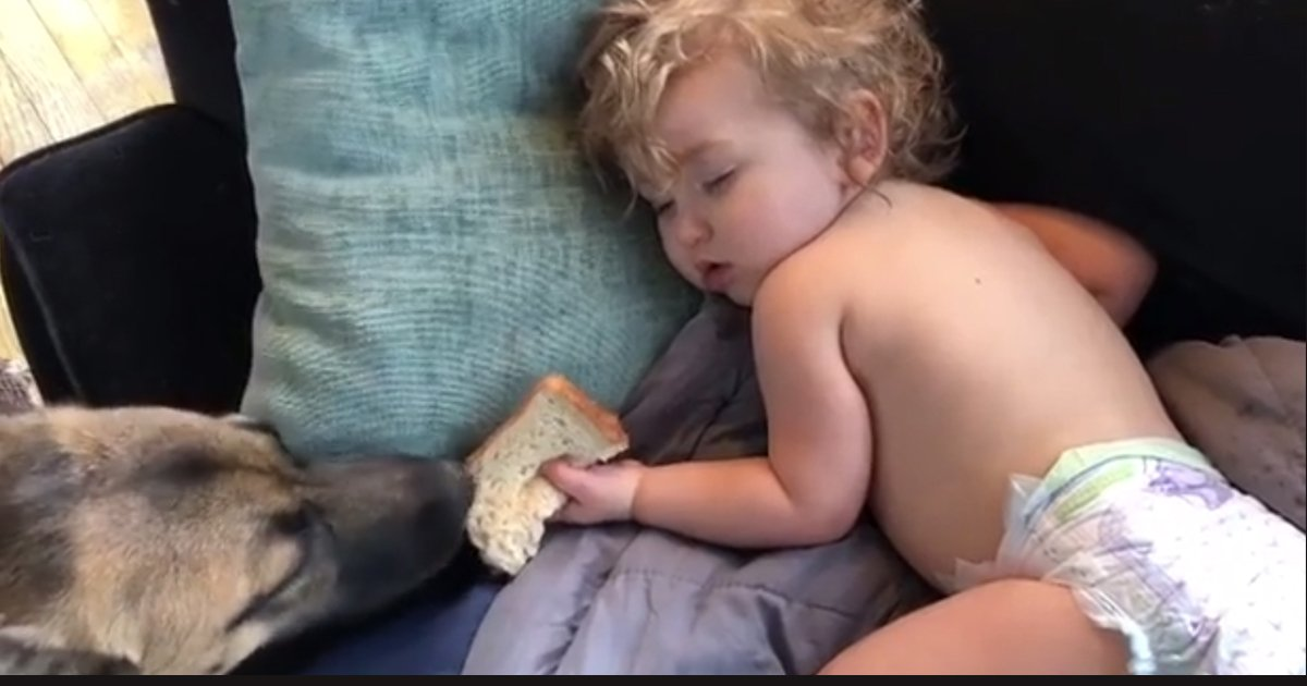 untitled 1 8.jpg?resize=412,232 - A Dog Adorably Took A Sandwich From A Sleeping Toddler