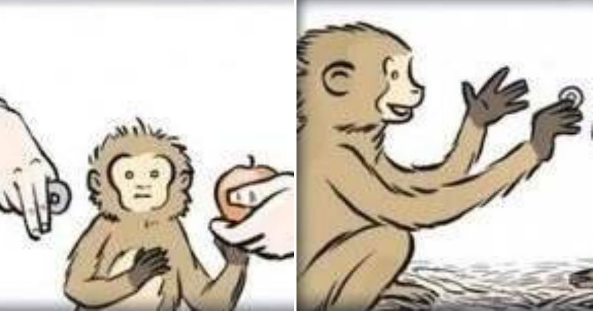 untitled 156.jpg?resize=412,232 - '돈'의 개념을 배운 원숭이가 처음으로 한 '충격적인' 행동