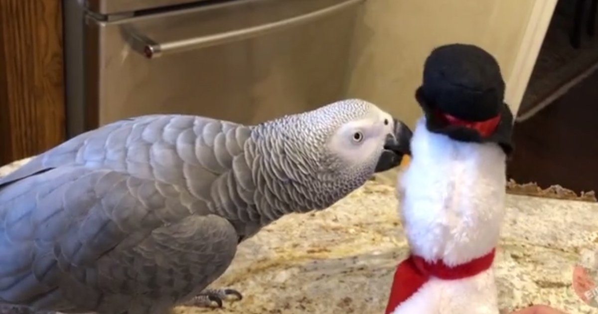 untitled 4 2.jpg?resize=412,232 - Dancing Parrot Showed Off His Moves To The Toy Snowman
