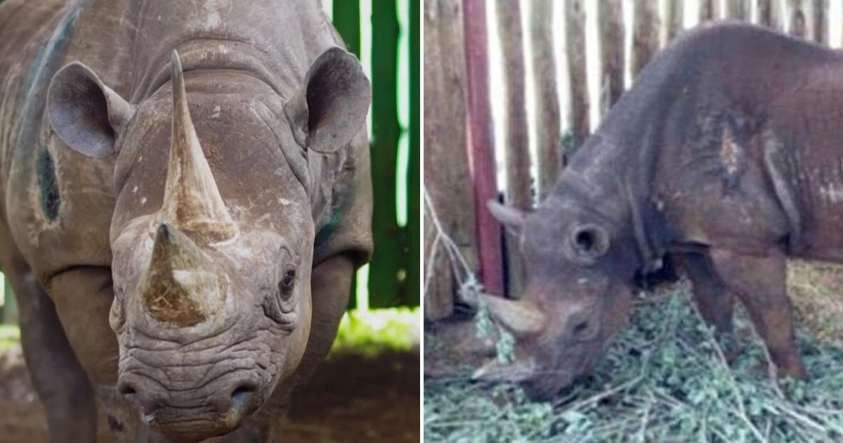 Image result for VARIOUS OF FAUSTA THE RHINO IN CONSERVATION AREA IN NGORONGORO