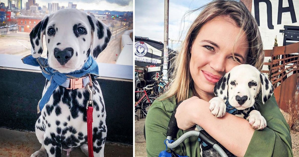 wiley heart on nose.jpg?resize=412,232 - Wiley The Dalmation With A Heart On His Nose Loves Hiking, Snuggling, And Car Rides