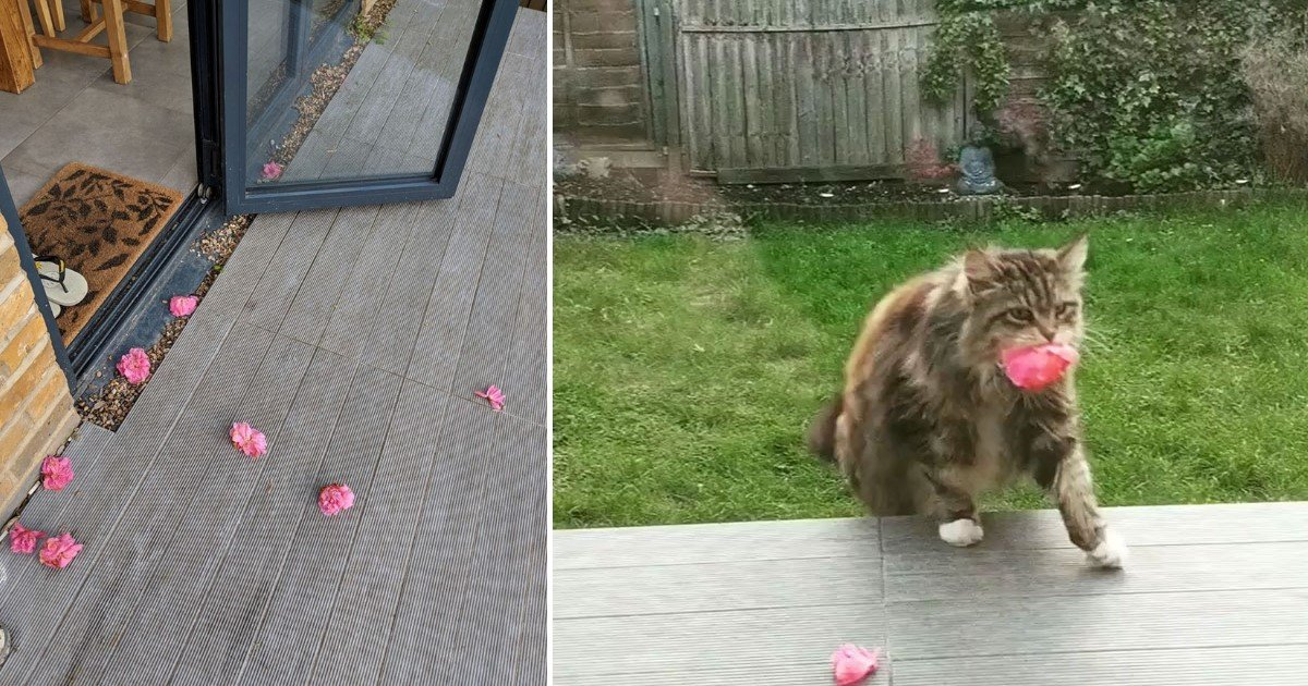 1 108.jpg?resize=1200,630 - A Woman Found Out The Mysterious Flowers On Her Doorstep Was From Her Neighbor's Cat