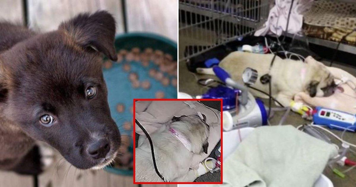 1 144.jpg?resize=1200,630 - Alimento Para Perros Están Bajo Investigación Por Encontrarse Ciertas Cantidades De Droga Para La Eutanasia