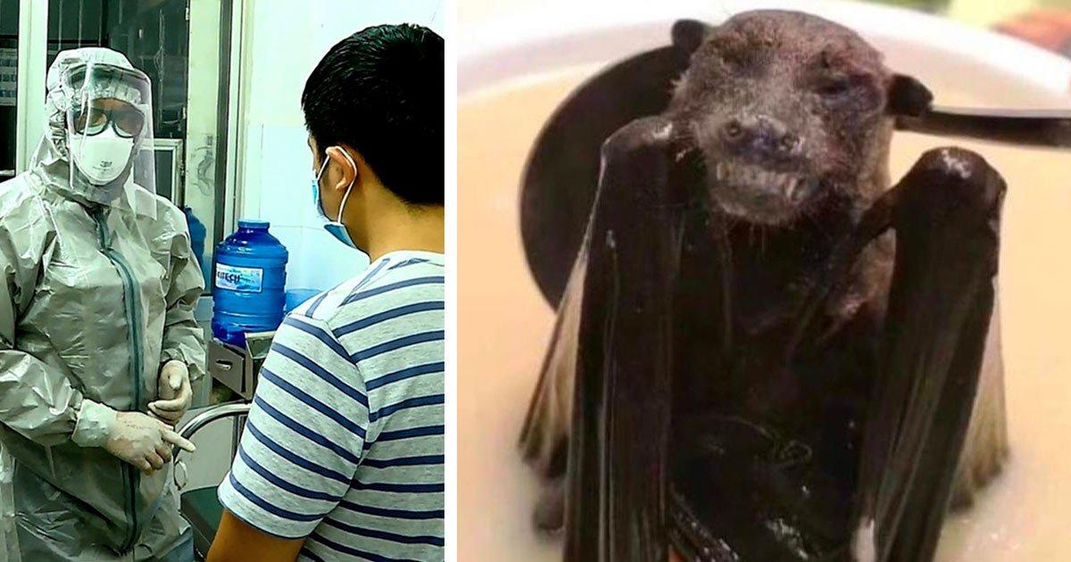 1 269.jpg?resize=574,582 - Afirman Que La Sopa China De Murciélago Es El Origen Del Nuevo Virus Letal Para Humanos