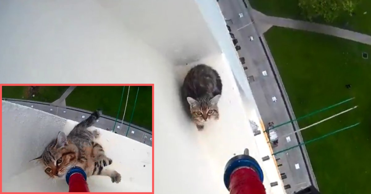 1 57.png?resize=412,232 - Kitten Stuck at The Ledge Of The Huge Building Saved