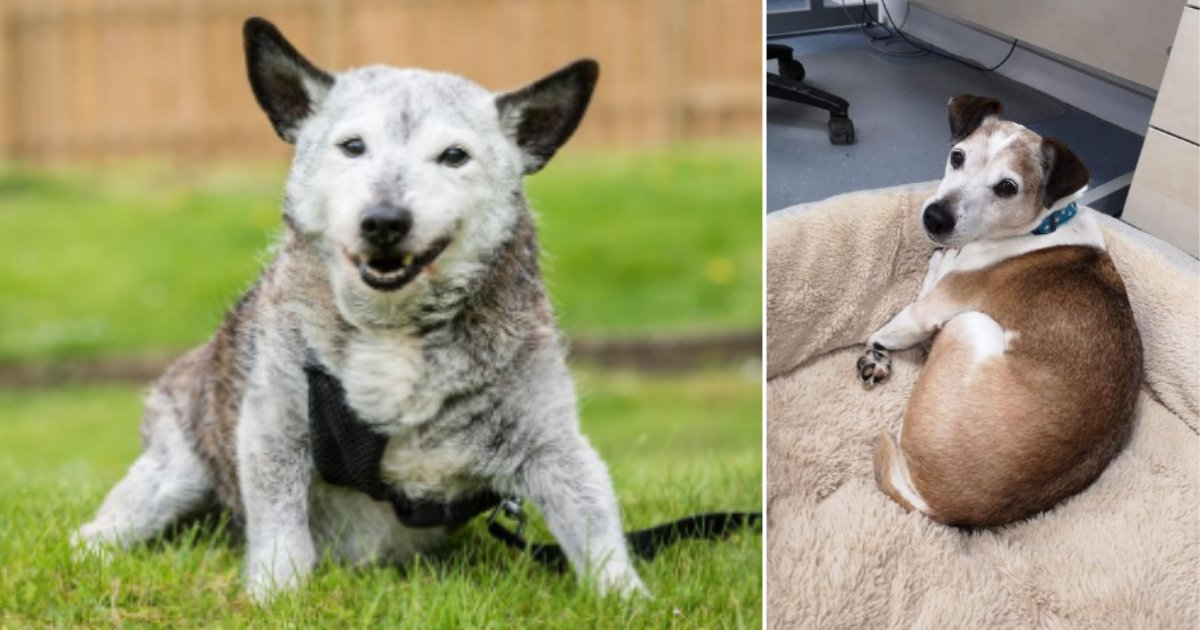 1 58.png?resize=412,232 - The Oldest Dogs Live The Best Life in Britain