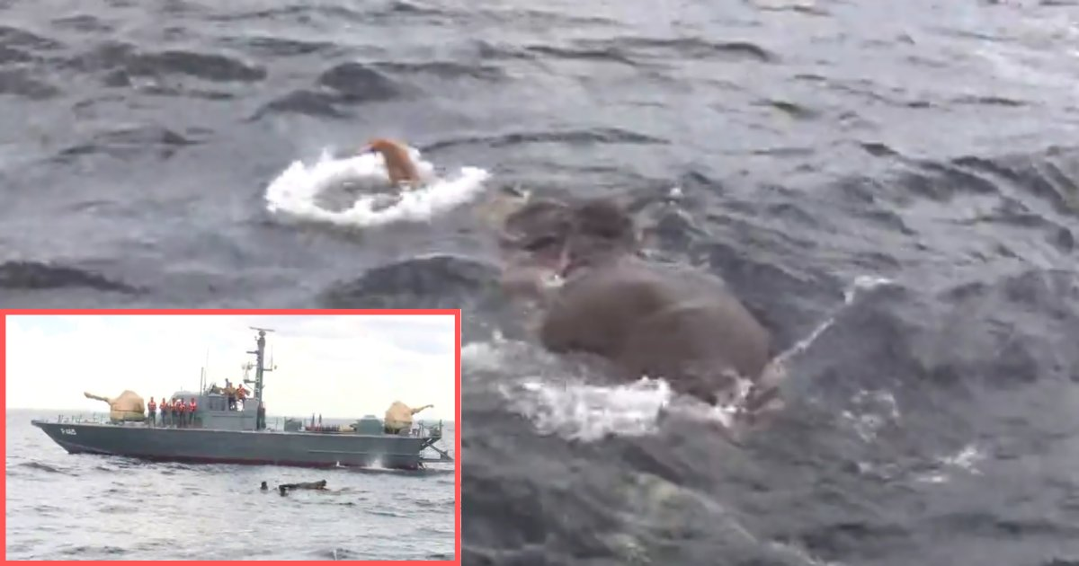 1 60.png?resize=1200,630 - Four Sri Lankan Navy Vessels Were Able to Rescue An Elephant That Was 5 Miles At Sea