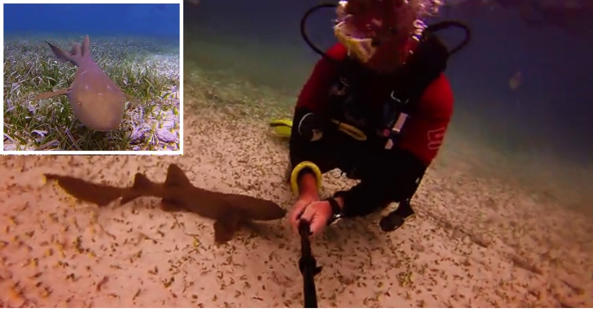 1 68.png?resize=1200,630 - Scuba Divers Made A New Baby Shark Companion