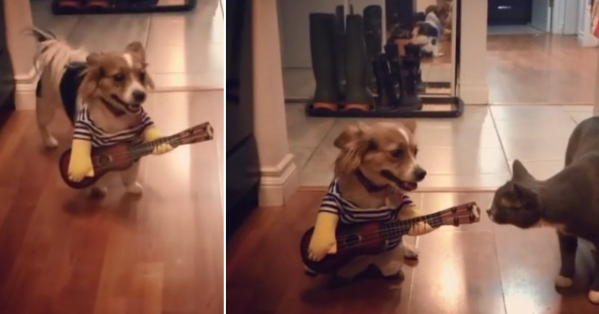 1 73.png?resize=1200,630 - Dog Loves Music and 'Plays' Guitar to Treat Everyone
