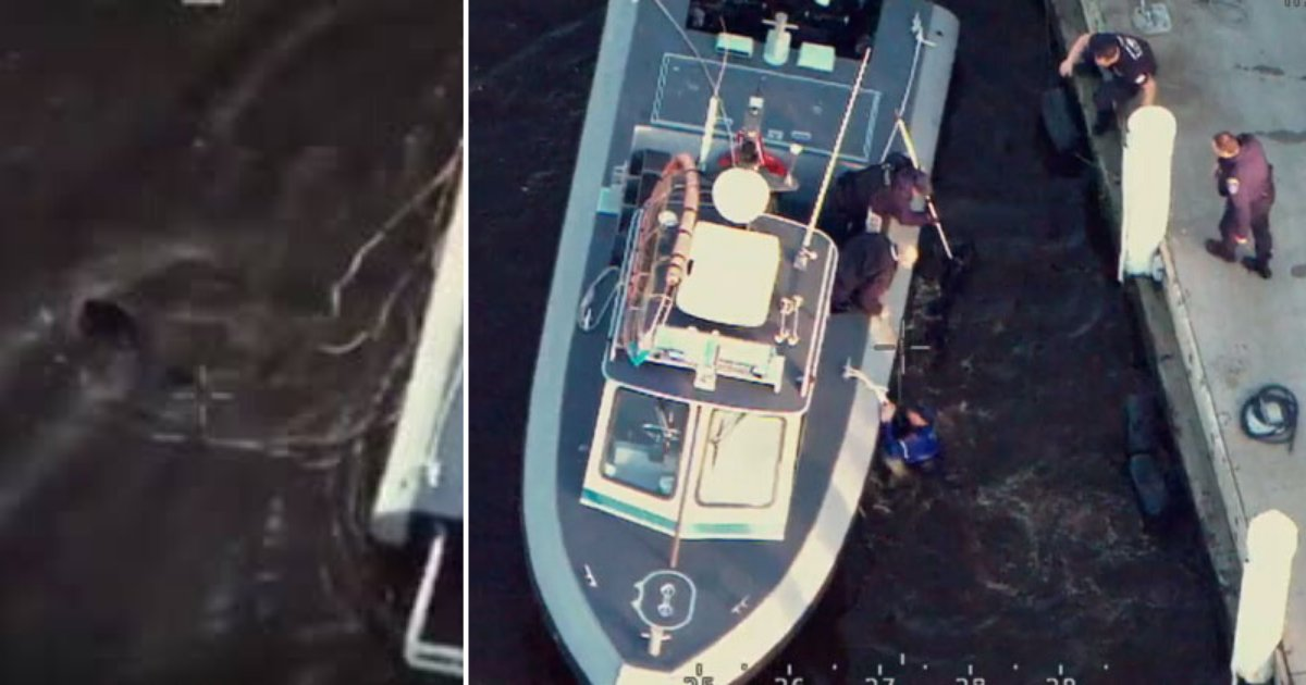 1 8.png?resize=1200,630 - Police Rescued A Dog From Drowning Caught on Footage