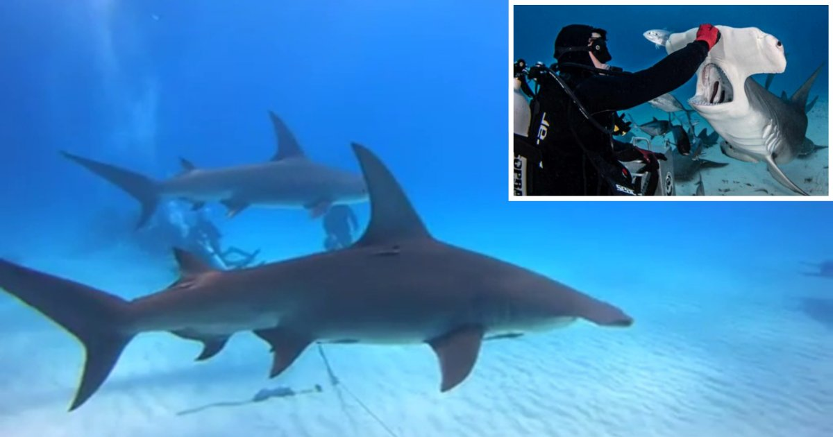 10 9.png?resize=1200,630 - Brave Photographer Captured What The Inside of a Shark's Mouth Looks Like