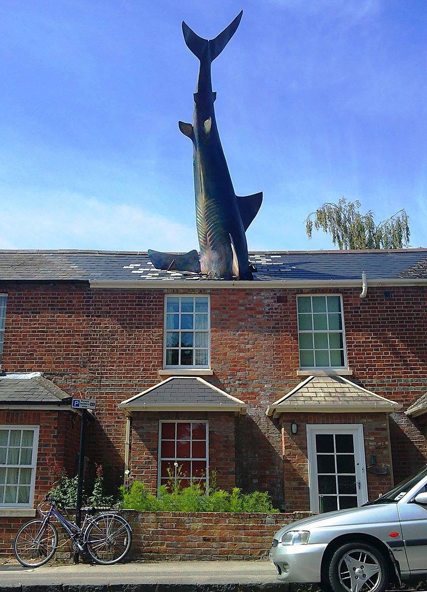 The Shark, Oxford, Uk