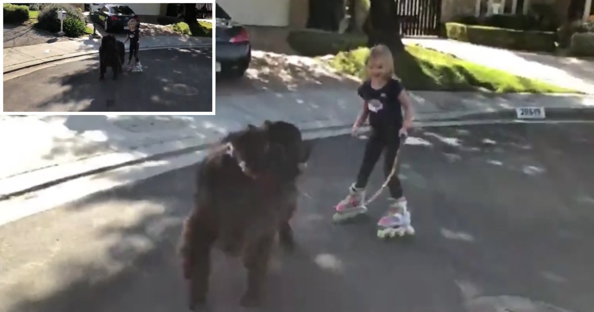 2 28.png?resize=1200,630 - Big Dog Only Listens to The Smallest Girl in The Family