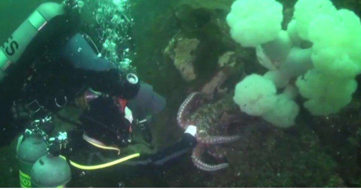 2 67.png?resize=412,232 - Un gros poisson a suivi un plongeur pour se faire caresser le menton