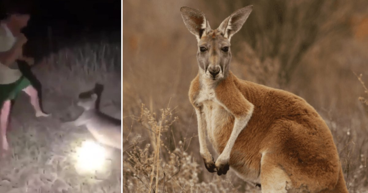 2 71.png?resize=1200,630 - Cruel Man Hits Helpless Kangaroo in The Face Continuously For Fun