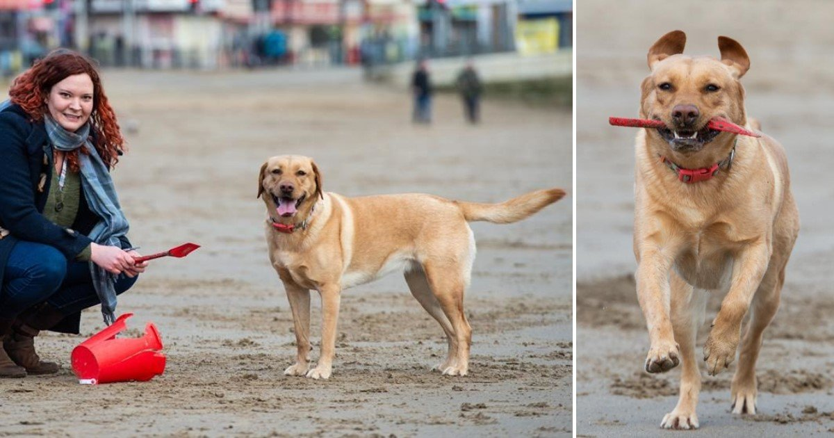 2 77.jpg?resize=1200,630 - Molly The Adorable Labrador Helped Her Owner Clean The Beach Every Day